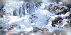 Une période de grand froid (Didier HEROUX) Tags: froid hiver winter glace givre ice alpes didierheroux herouxdidier torrent eau water h2o saison neige snow blanc février raw leica panasonic gel annecy alpesdunord auvergnerhônealpes france french