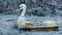frozen field with added swan boat 02 (byronv2) Tags: winter frost frozen cold weather field fields swan swanboat boat farm lanarkshire rural countryside clydevalley scotland surreal unreal odd bizarre