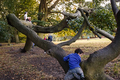 Hampstead Heath, London (jaumescar) Tags: hampstead heath london park kid playing game tree branch parents family climbing little bicycle nature urban forest people group dof outdoor