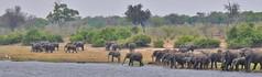 Elephant herd on the Chobe River (Botswana) (stevelamb007) Tags: choberiver stevelamb botswana chobenationalpark kasane elephant herd nikon d90 18200mm panorama pano savannah beach africa africanwildlife hazy overcast drinking