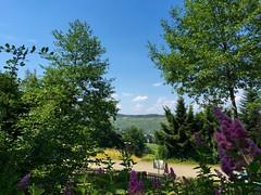 bei Mehring (latariosreise) Tags: blue sky tree clouds germany deutschland europa europe day tag himmel wolken blau cheerful baum mosel rheinlandpfalz moselle rhinelandpalatinate heiter appleiphone6 latarios