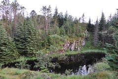 Mały staw na górze Floyen | Small pond on Mt. Floyen
