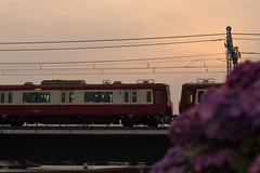 20150622-DS7_4546.jpg (d3_plus) Tags: street sunset flower macro bicycle japan train cycling twilight scenery bokeh outdoor dusk daily 夕陽 日本 streetphoto yokohama 電車 tamron 夕暮れ 空 横浜 dailyphoto 風景 kawasaki マクロ keikyu 逆光 thesedays tamron90mm pottering 自転車 川崎 againstthelight againstthesun 景色 神奈川県 サイクリング 日常 路上 日没 ボケ ストリート 京浜急行 ニコン 京急 tamronmacro タムロン tamronspaf90mmf28 ポタリング tamronspaf90mmf28macro11 d700 172e kanagawapref 屋外 tamronspaf90mmf28macro nikond700 spaf90mmf28macro 路上写真 spaf90mmf28macro11 nikonfxshowcase 172en