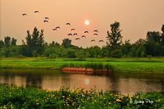 Summer Pond # 53 (Mike Linnihan) Tags: ngc npc