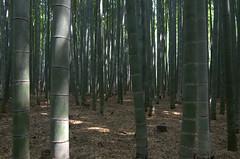 Arashiyama Bamboo Grove Bamboos