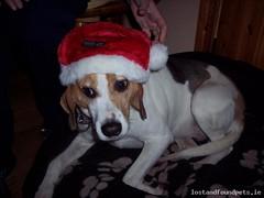 Thu, Dec 8th, 2016 Lost Female Dog - R568, Kenmare, Kerry