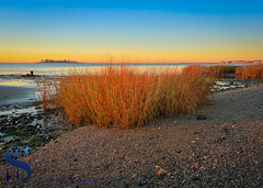 Morning light warming the reeds at Fort Trumbull beach (Singing With Light) Tags: 19th 2016 alpha6000 autumn forttrumbullbeach november silversands sonya6000 abandonded ingingwithlight photography singingwithlightphotography sony sunrise