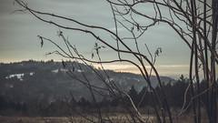 Winter_30 (losing.today) Tags: nature oregon outdoors pacificnorthwest portland pdx portlandor portlandoregon cold coldseason winter trees