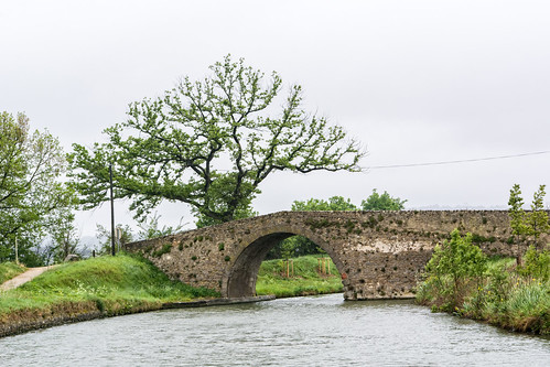 Tree Bridge 7588.jpg