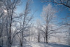 Winter Scene (maytag97) Tags: maytag97 winter scene snow beautiful white landscape park nature background forest sky natural tree outdoor snowy season view cold branch light sun new weather country sunlight woods snowfall trees beauty idaho