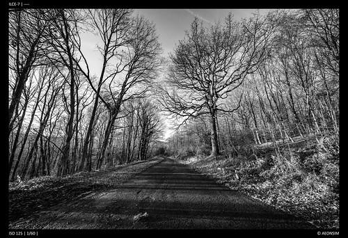 Monotone Path