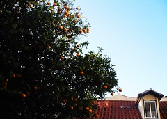 winter fruits (*F~) Tags: lisboa portugal winter light fruits oranges orangetrees roofs red green blue window city urban poetry lhiveràlisbonne