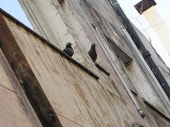 city birds (CatnessGrace) Tags: birds pigeons urban city architecture buildings urbandecay pastels urbannature lines angles pov