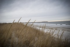 The beach (devinchaganis) Tags: seagrass dunes sea winter snow ocean beach nikon nikonphotography