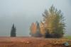 0929 IMG_3377 (JRmanNn) Tags: fairbanks trees alaska 2014 fog foggy