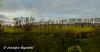 Grünes Panorama (Bernsteindrache7) Tags: winter weather color düsseldorf garden green germany clouds sky tree heaven himmel nrw landscape park panasonic lumix