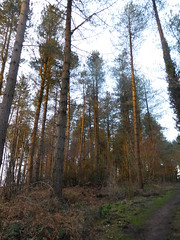 Afternoon trip to Cinderford 18th Jan 2017 (ecology_garden) Tags: