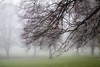 Winters Beauty.. (aronalison) Tags: foggy fog trees winter winterfog treesinfog