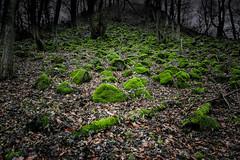 DSC4461 (ste.wi) Tags: deutschland sony stone stones rhinelandpalatinate rheinlandpfalz germany wood basalt ilce6000 alpha6000 natur nature landscape landschaft moos moss selp1650