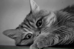 IMG-20150603-WA0003 (nunzia_casamassima) Tags: cats cat felino felini gatto gatti gattorosso animaledomestico