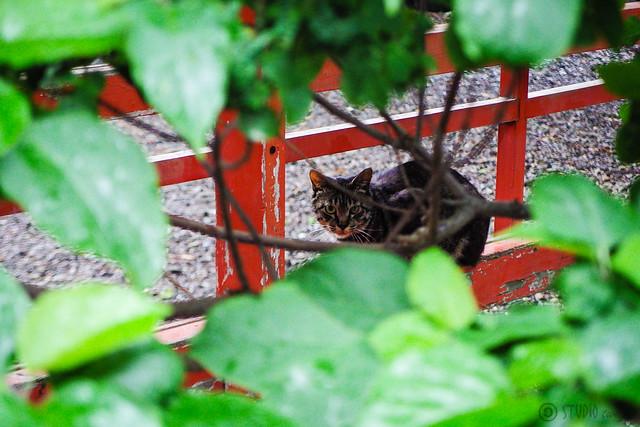 Today's Cat@2015-06-20