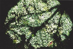a painting (omnia_mutantur) Tags: wood light shadow italy naturaleza milan verde green luz nature austria italia expo lumière milano natureza ombra sombra natura vert ombre bosque pavilion luce italie pavillion bois autriche bosco pavilhão bosques padiglione áustria expo2015 expomilano expomilan pabéllon