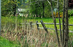 Pods by the Fence (2bmolar) Tags: fence schuylkillcounty fencedfriday
