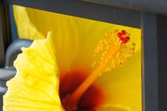 20150625-DS7_4919.jpg (d3_plus) Tags: street plant flower macro nature bicycle japan cycling tokyo nikon scenery bokeh outdoor object fine daily bloom  streetphoto   tamron   dailyphoto   kawasaki  thesedays tamron90mm pottering     fineday         tamronmacro  tamronspaf90mmf28   tamronspaf90mmf28macro11 d700 172e kanagawapref  tamronspaf90mmf28macro nikond700 spaf90mmf28macro  spaf90mmf28macro11 nikonfxshowcase 172en