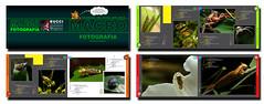 Mont 4 Pg livro Insetos Bucci (Bucci 10) Tags: brazil insectos nature brasil book photo foto natureza insects livro bucci insetos publicao robsonbucci