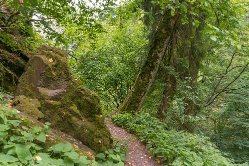 Sentier vers la cascade du  Nideck