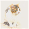 (2427) Cat (QuimG) Tags: retoc retoque retouch drawing painting pets natura nature naturaleza olympus quimg quimgranell joaquimgranell afcastelló specialtouch obresdart cat gat