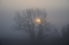 Cold morning (Jordi sureda) Tags: morning jordisureda fotografia forest photography pointofview arbres tree nikkor nature niebla foggyforest mystery misterioso bosque tranquilo photo paz paisatge light landscape simple senzill silhouette frio fred llum un one oscuridad d90