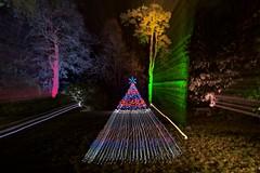 Westonbirt Enchantment V (ye sons of art) Tags: christmas xmas trees lights illuminations gloucestershire england uk forestrycommission winter westonbirt zoom christmastree