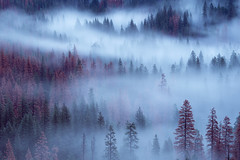 Whispers of Winter (Sapna Reddy Photography) Tags: yosemite trees valley mist fog winter foliage nps nationalpark serene landscape outdoor waterfall bridalveil tunnelview sierra california
