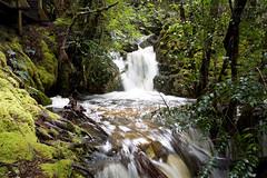 Crater Falls (Sam Randles) Tags: craterfalls waterfall forest river wilderness tasmania australia cradlemountain