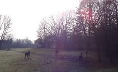 running horses (FotoFrom) Tags: horse lofi horeses pferde runnning motion bewegung vintage escape fence gatter zaun bäume tree trees fliehende