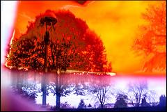 20161106-007 (sulamith.sallmann) Tags: pflanzen abstract abstrakt baum berlin blur deutschland effect effekt filter folie folientechnik germany kunststoff lamp lampe mitte plants plastic plastik sonderburgerstrase strasenlampe tree unscharf wedding deu sulamithsallmann