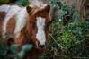 Peluche de ojos azules (SantiMB.Photos) Tags: 2blog 2tumblr 2ig caballos horses baztán navarra otoño vacaciones2015 leorlaz españa esp