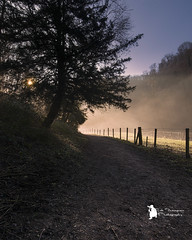 Into the light (Lumen01) Tags: dovedale on1 valley mist fog