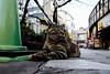 neko-neko1624 (kuro-gin) Tags: cat cats animal japan snap street straycat 猫 canon powershot pro1