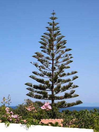 Île de Stromboli / Végétation méditerranéenne
