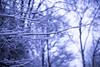 IMG_7881 (Une fille) Tags: canon d 6d tamron outdoor woods forest snow medieval trees snowflake sky blue mist walk alone landscape melancholy dream dreamy grivegnée chartreuse bois oblats parc belgique belgie luik liege