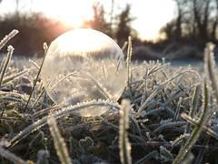 Frozen little world (Bella 44) Tags: frostymorning cold bubble