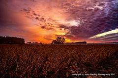 Field Of Beans (T i s d a l e) Tags: tisdale fieldofbeans soybeans dawn sunrise autumn fall december 2016 easternnc