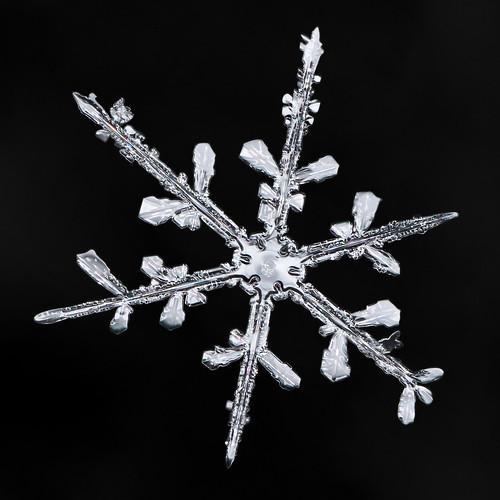 Snowflake-a-Day #35 / Mitakon 20mm 4-4.5x F/2 Macro lens Review