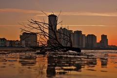Boulevard bij ochtendgloren (Omroep Zeeland) Tags: boulevard ochtendgloren weer natuur zeeland buienradar walcheren ochtend winter tak