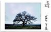 Week 2 Outtakes (Doug Churchill) Tags: fuji fujifilm instax instax90 instaxmini analog bidwellpark blueoak ca california chico film park tree upper upperbidwellpark
