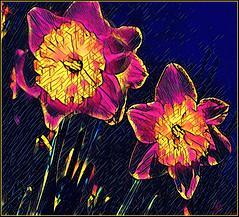 (Cliff Michaels) Tags: nikon flowers photoshop pse9 prisma blossoms
