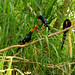 A trio of Green Wood Hoopoe