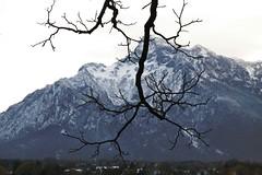 Alpen (rosa_rusa) Tags: road alps alpes germany arbol alemania alpen rosarusa